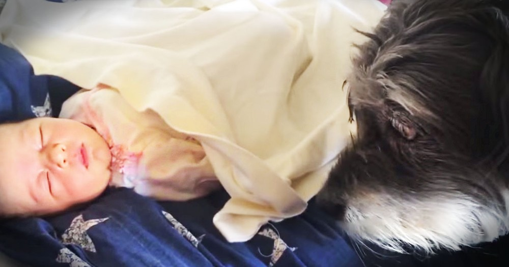 One Helpful Pup Tucks Baby In For A Nap--Aww!