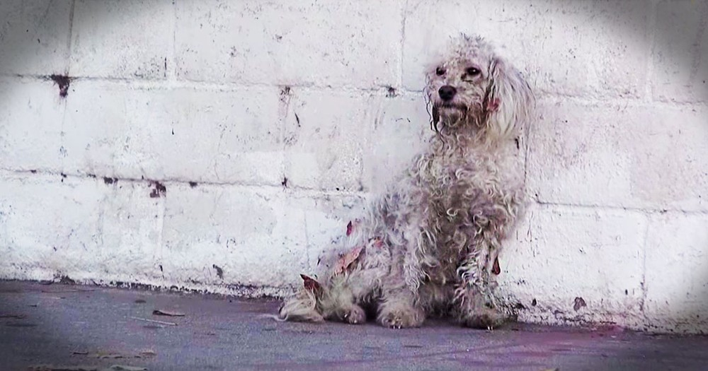 This Homeless Dog Shows Rescuers Incredible Gratitude