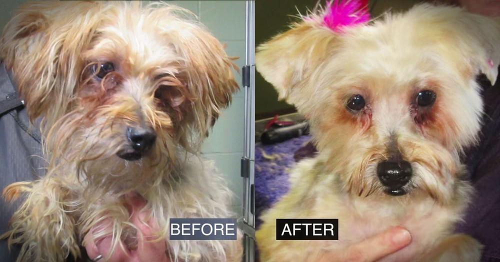 Kind 'Prankster' Helps Deserving Animal Shelter With Amazing Surprises