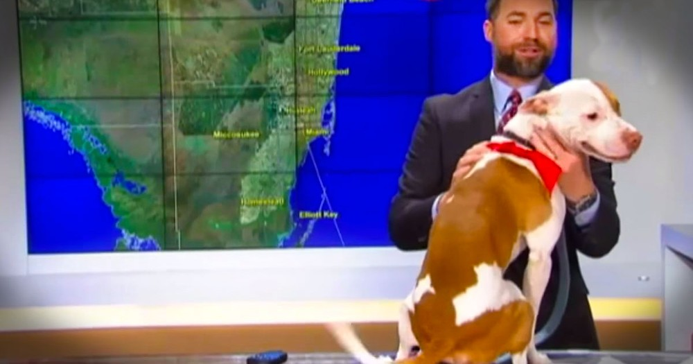 Rescue Pup Adorably Surprised The Weather Man!
