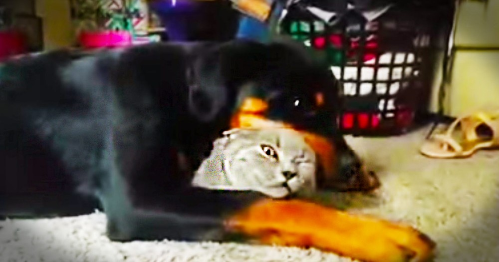 Pup's Favorite Kitty Isn't Quite Sure About All The Affection