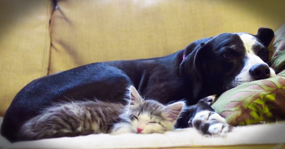 Adorable Kitty Chats about Adoption and Friendship -- So Cute!