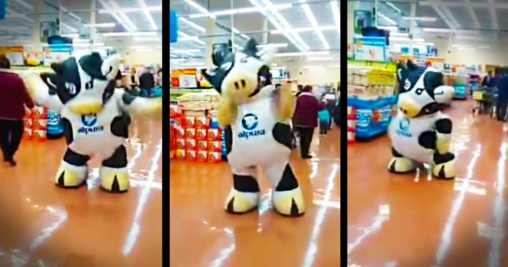 1 Cow Flash Mob Busts A MOOve At The Grocery Store