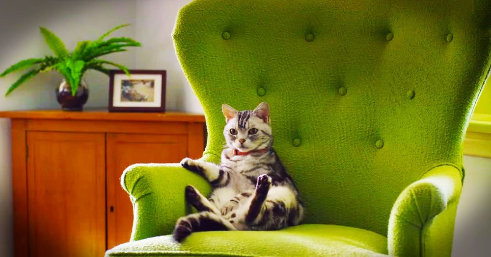 Kitty Explains Humans' Crazy Behavior During The 'Big Game'
