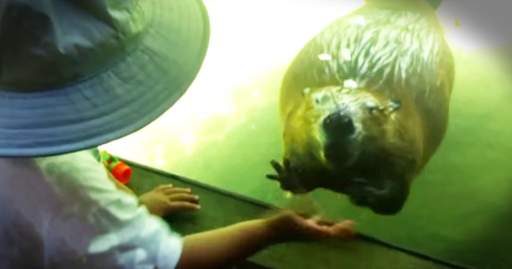 What This Beaver Does To Play With A Toddler Is Too Cute!