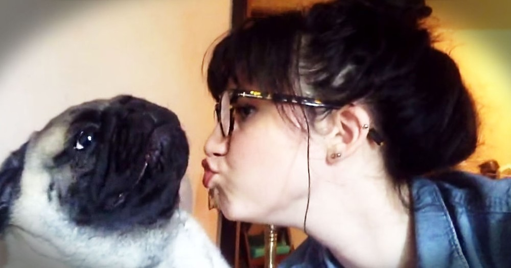 Pug Adorably Resists His 'Momma's' Kisses
