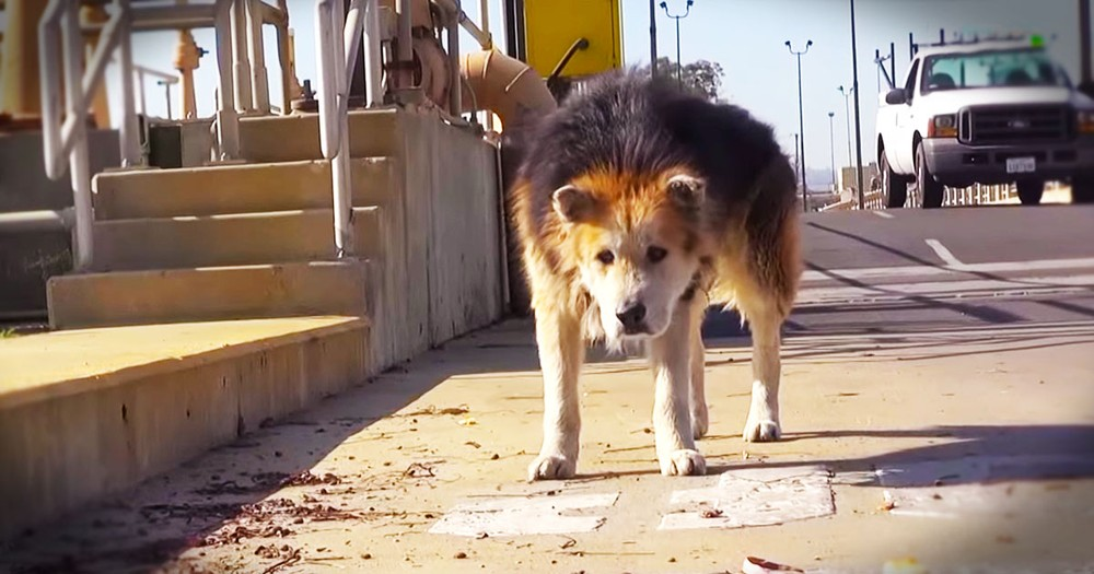 Abandoned Old Pup Had Terrible Life, Until THIS!