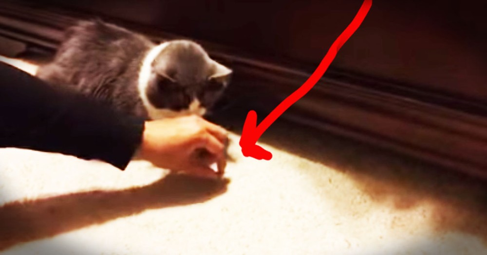 Patient Kitty Gets Surprise From Under The Bed-LOL!