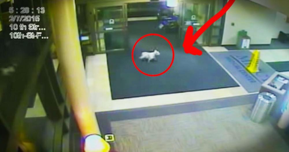 Loyal Dog Makes Surprise Hospital Visit For Sick Human
