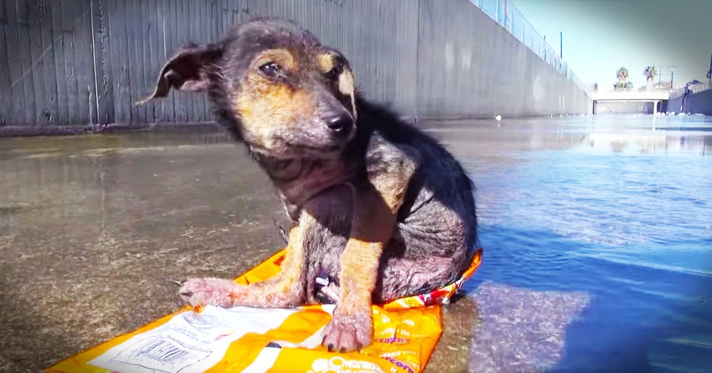 Brave Pup Gets Incredible Rescue From Canal
