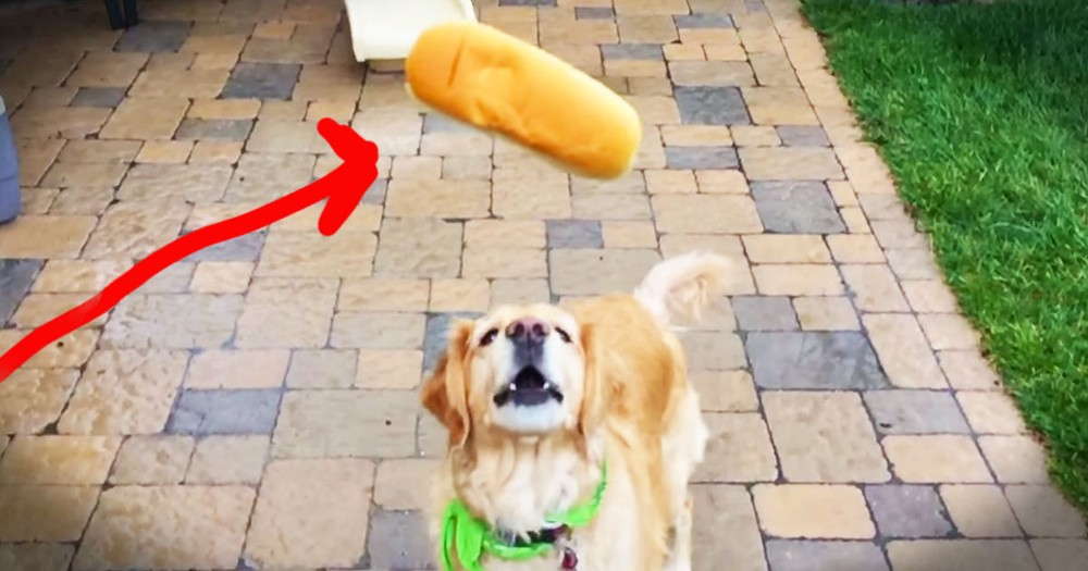 Dog Fails At Catching Food