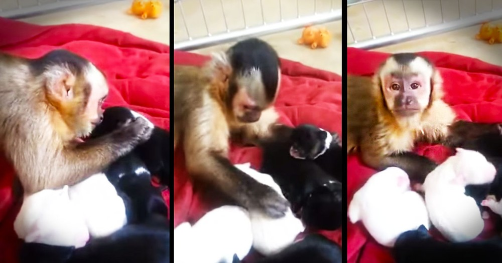 Apparently, This Monkey Loves His New Puppy BFFs--Aww!