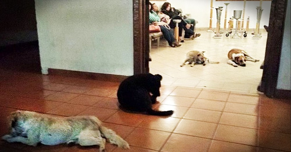 Dogs Stun Everyone When They All Showed Up To Pay Respects!