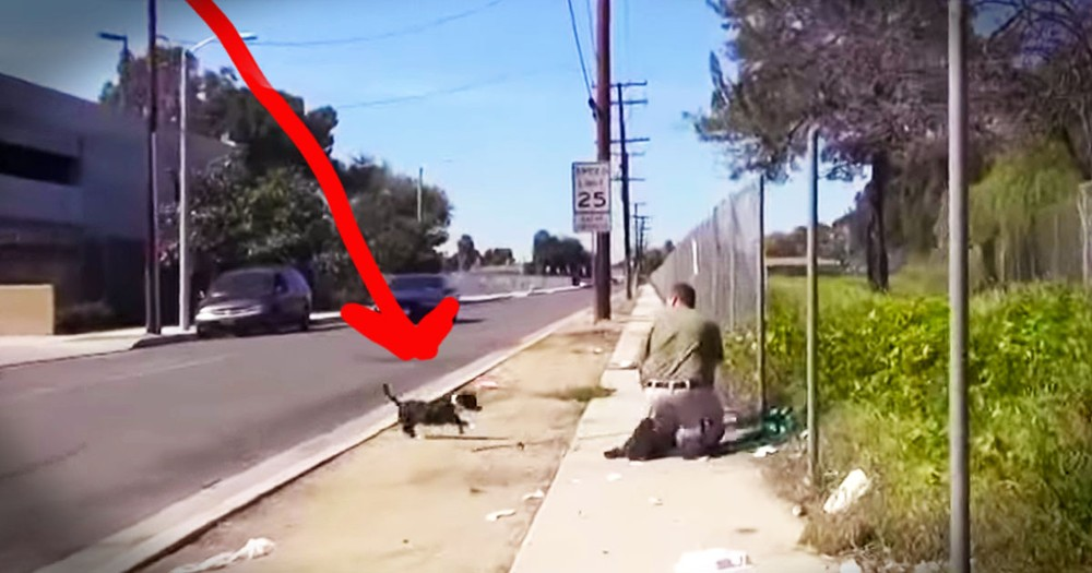 Kind Strangers Help Save 2 Abandoned Dogs Near A Dangerous Freeway!
