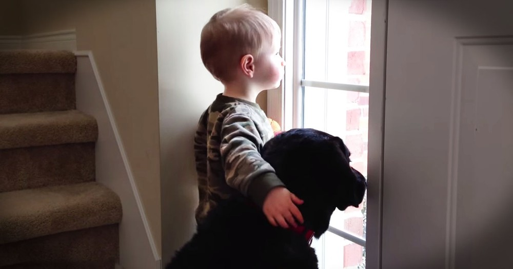When This Pup Was Sad, A Sweet Boy Stepped Up And Did THIS To Comfort Him--Awww!