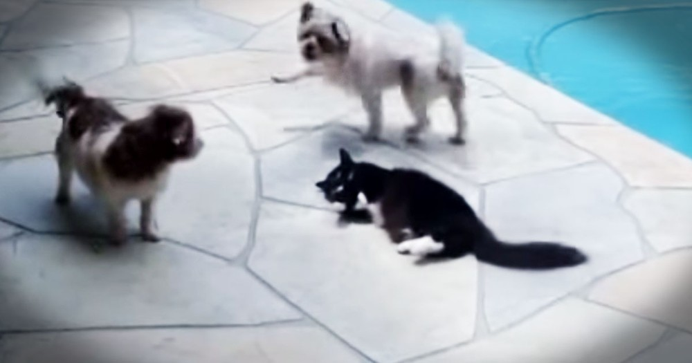 Puppies Got A Little TOO Friendly For This Kitty--LOL!