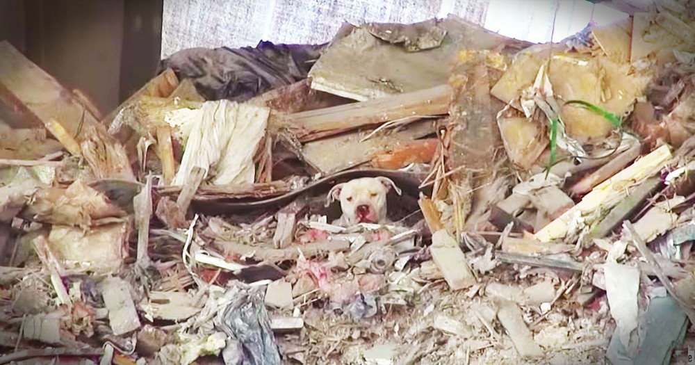 What They Found On This Trash Pile Will Break Your Heart!