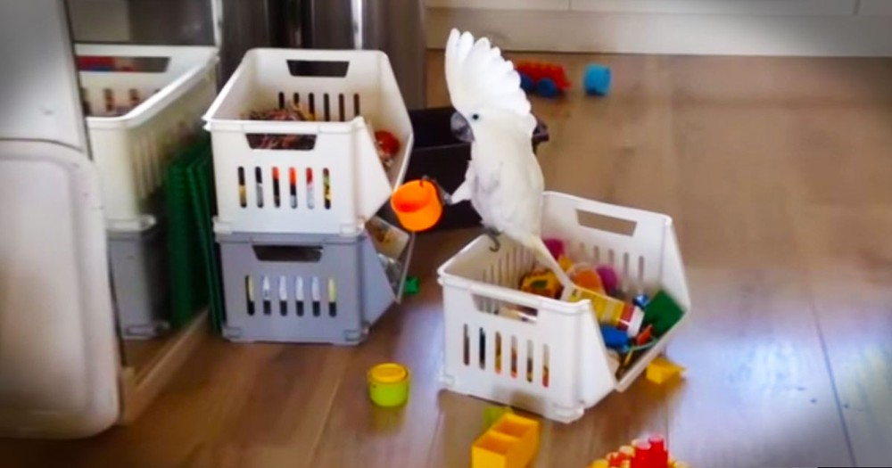 Funny Cockatoo Likes To 'Sing' Into A Cup--LOL!
