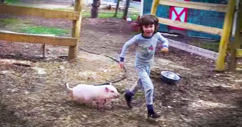 Playtime With This Pig Couldn't Be Cuter!