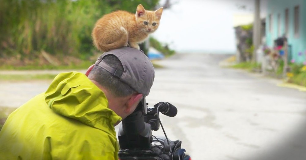 He Was Trying To Film These Cats. Until The Littlest Kitten Had An Adorable Idea.