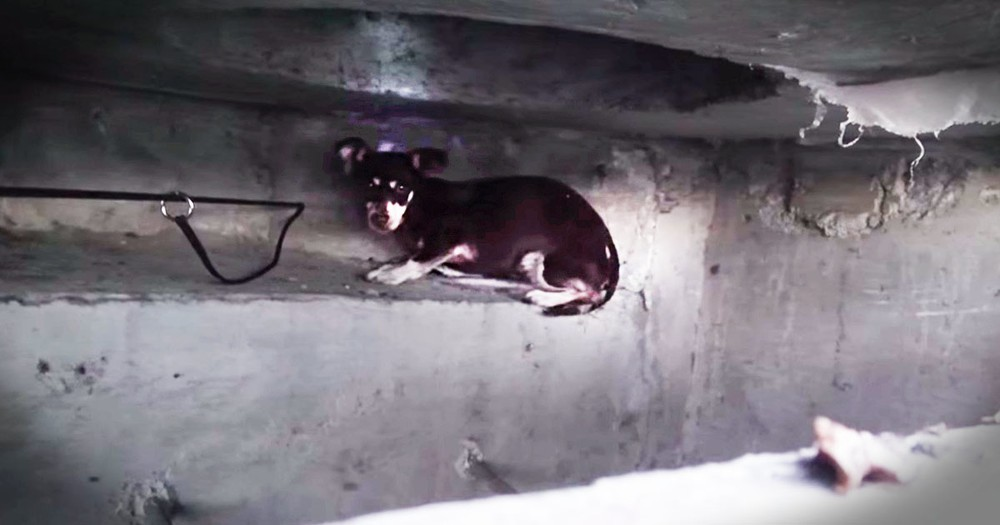Watching This Dog's Sewer Rescue Is Nerve-Racking