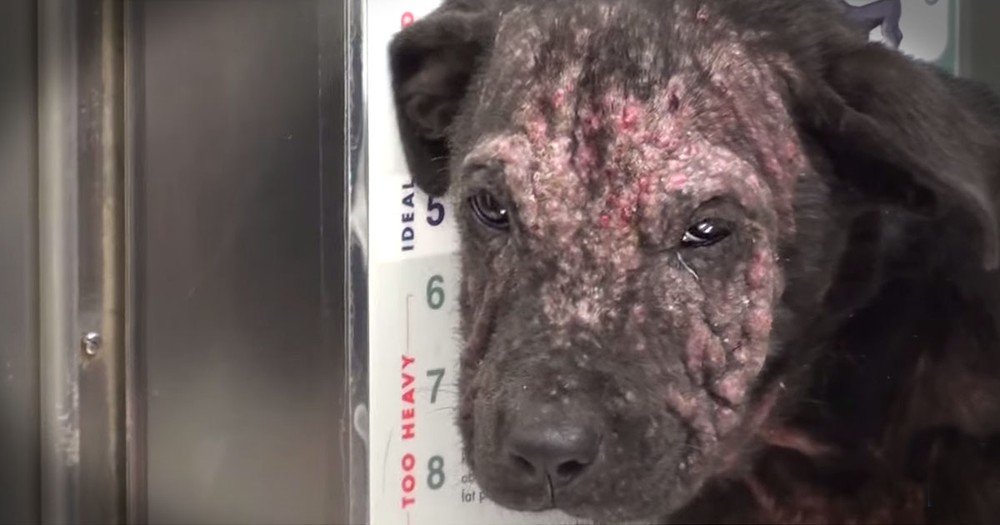 Homeless Puppy Was About To Be Put Down, And Then Her Whole Life Changed!