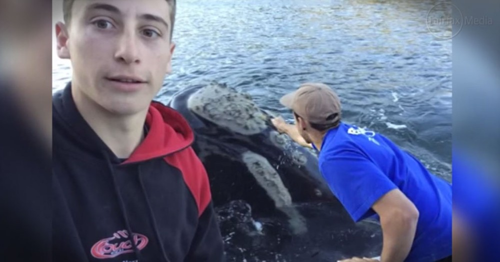 They Answered This Whale's Plea For Help, And His 'Thank You' - STUNNING
