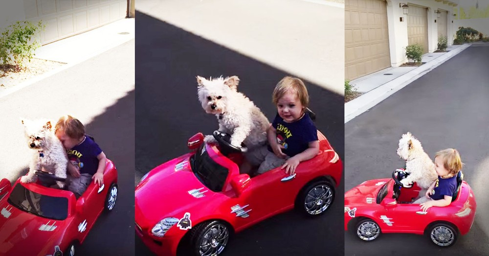 This Dog Is The Cutest Driver You'll Ever See