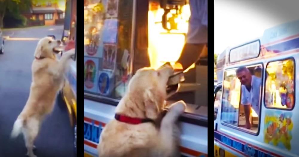 Ice Cream Man Has The Cutest Best Friend!
