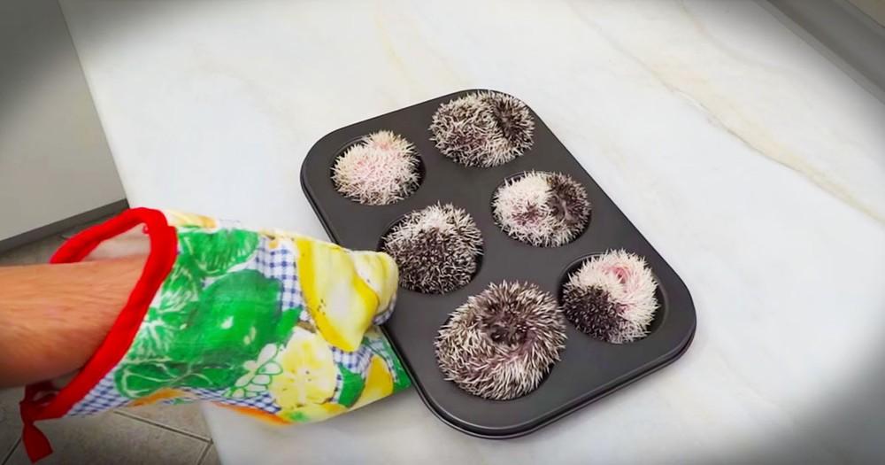 Muffin Tin Or Hedgehog Hotel -- You Decide! LOL