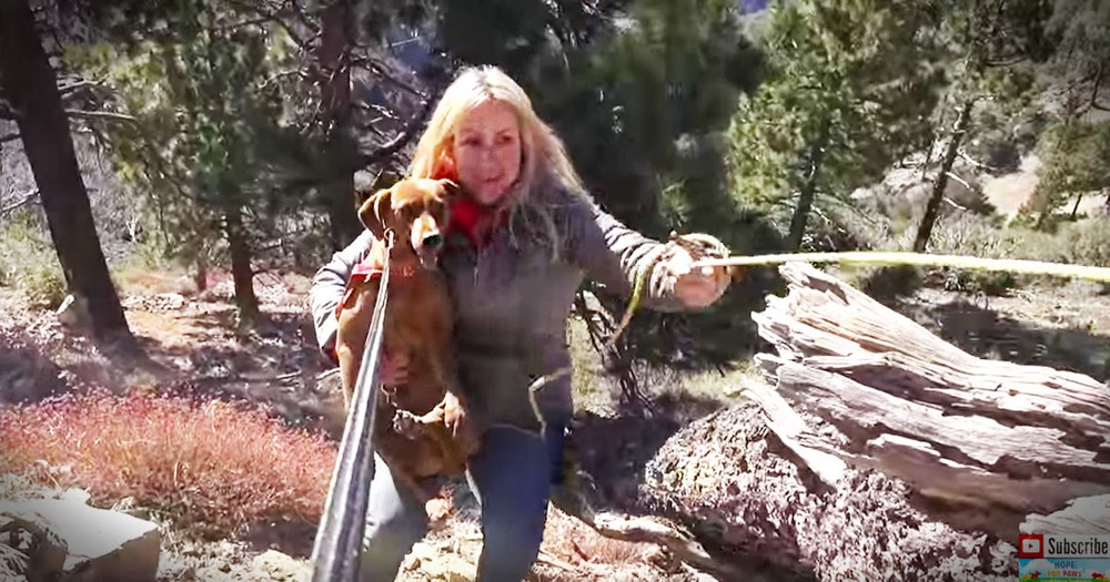 3 Dogs' Mountain Side Rescue Is Nail-Bitting