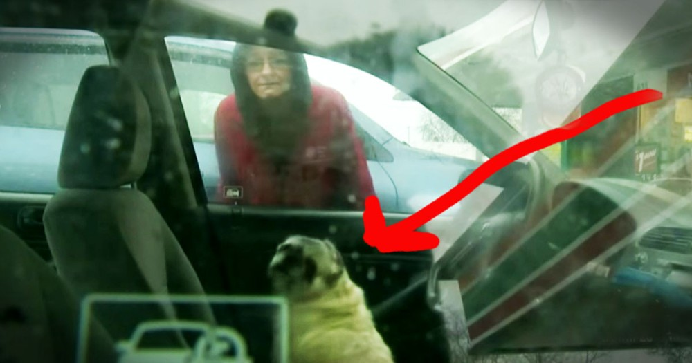 Act Of Kindness Saved A Dog And The Woman Who Loves Him