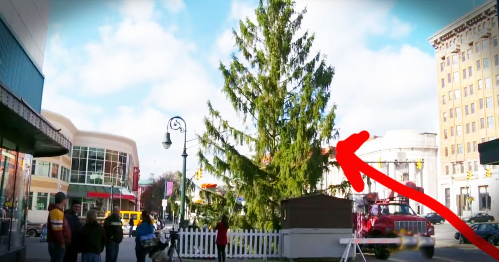 World's Ugliest Christmas Tree' Just Got A Second Chance And It's Beautiful