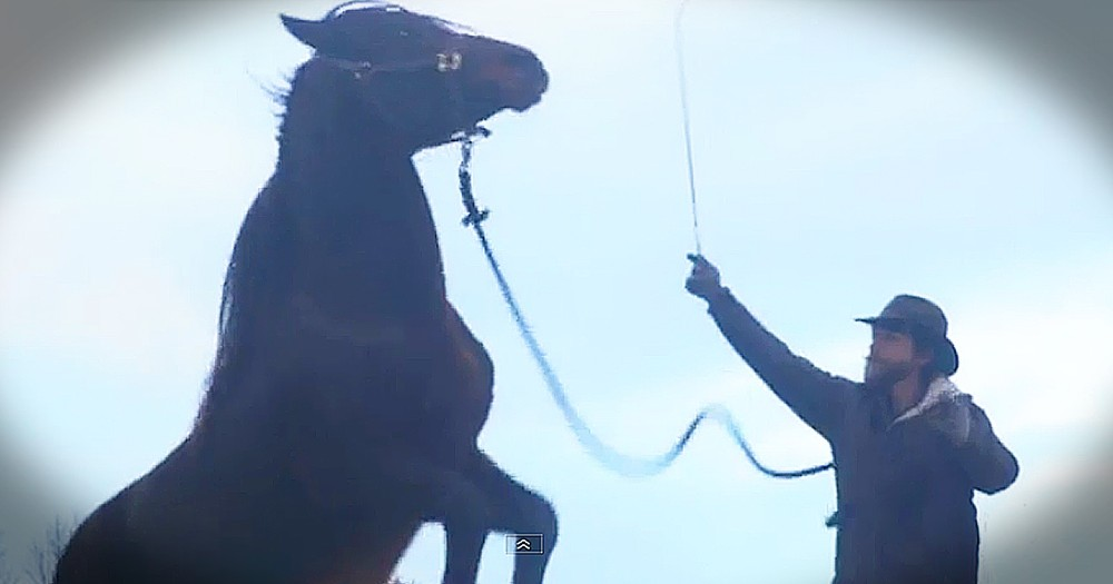 Dangerous Wild Horse's Story Of Redemption Is Simply Amazing!