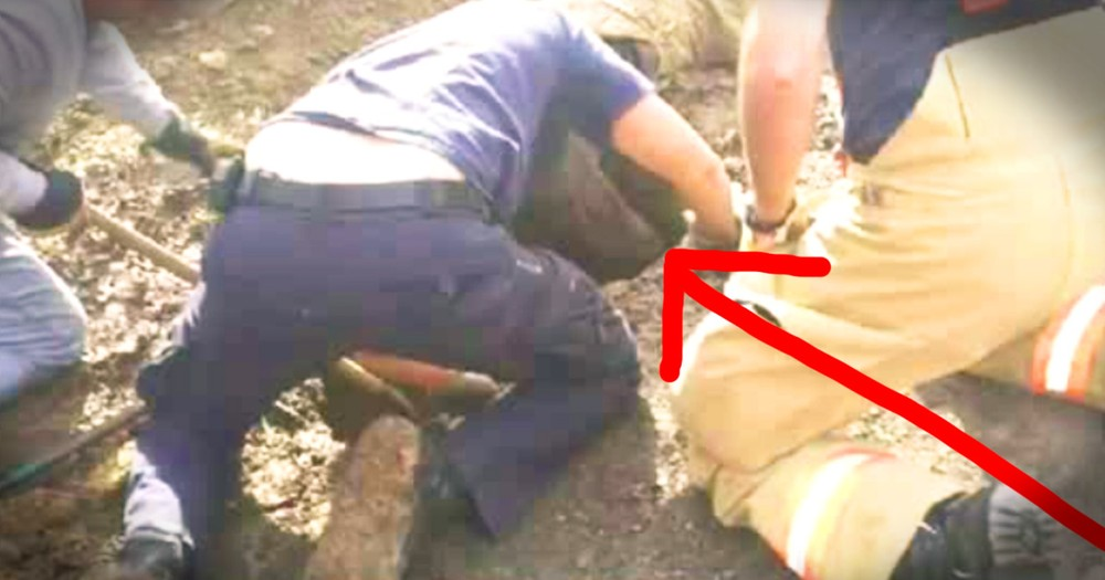 Dog Rescued After 3 Days Will Break Your Heart