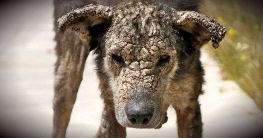 A Stray Dog With A Face Of Stone Is Utterly Transformed By Love!