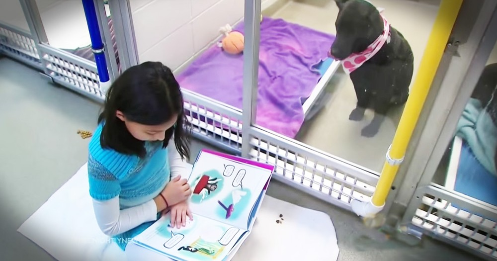 Kids Are Reading To Shelter Dogs And It's For The BEST Reason