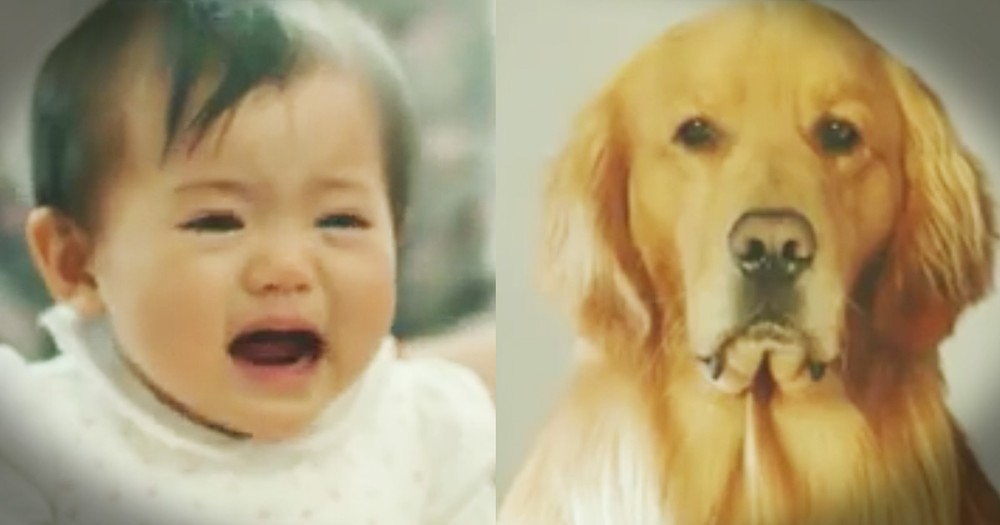 Dog's Disguise For The New Baby Will Melt Your Heart