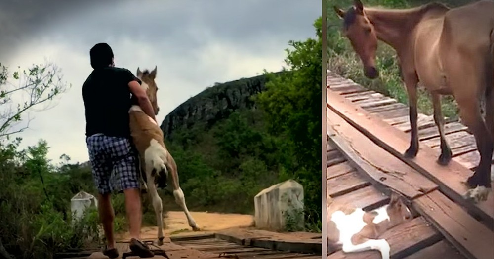 Trapped Foal Gets Beautiful Bridge Rescue