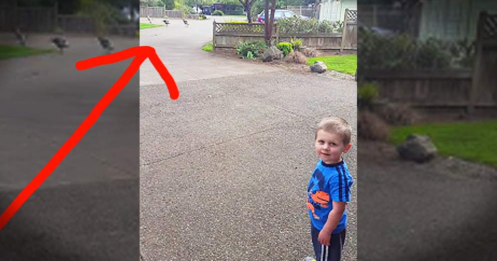 2-Year-Old Boy Talking To Turkeys Will Crack You Up