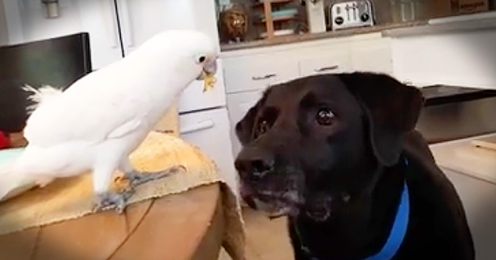 Unlikely Animal Friends Are Adorably Helpful