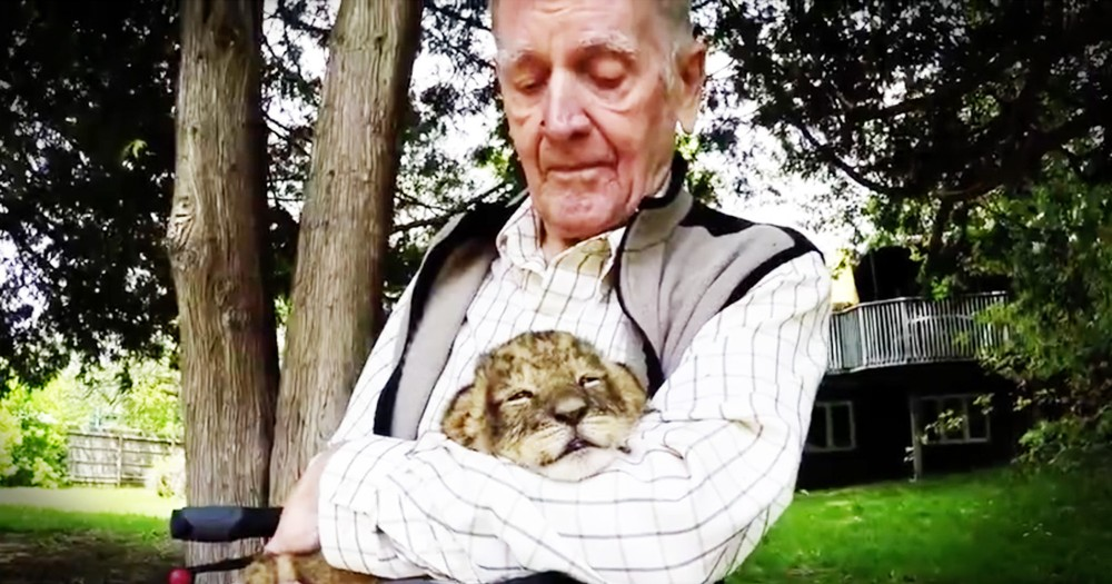 Veteran's Emotional Moment With A Baby Lion Will Make Your Day