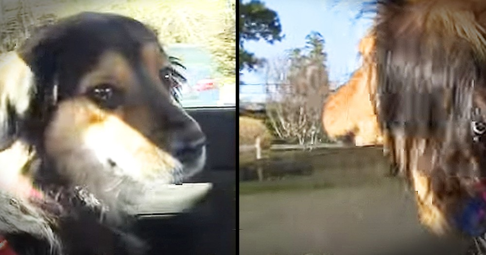 Dogs Who Survived Horrible Life Together Have Amazing Reunion