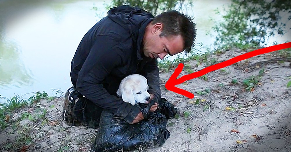 Rescue Dog's Thankful Thoughts Will Move You To Tears