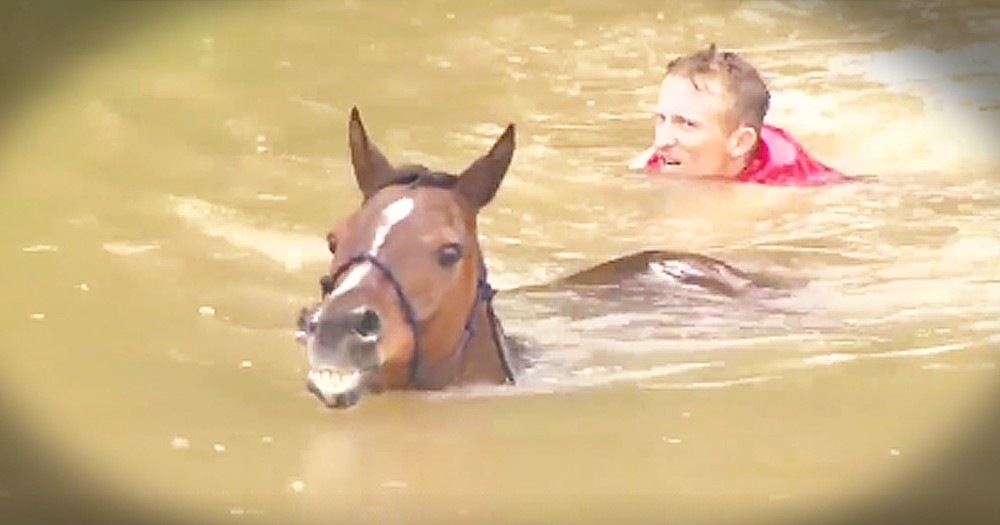 Strangers Saves Horses From Life-Threatening Flood Waters