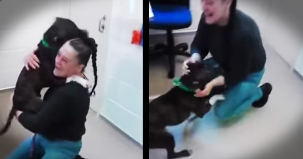 Dog Reunited With His Human Momma After 2 Months Is So Excited I Can't Handle It