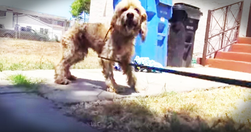 Terrified Starving Dog Gets A Nerve-racking Rescue