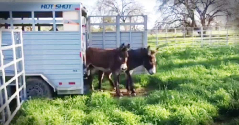 Rescue Donkeys See Grass For The First Time