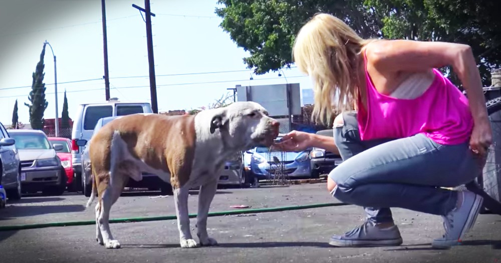 Gentle Giant Pup Is The Easiest Rescue You'll Ever See And It's Beautiful