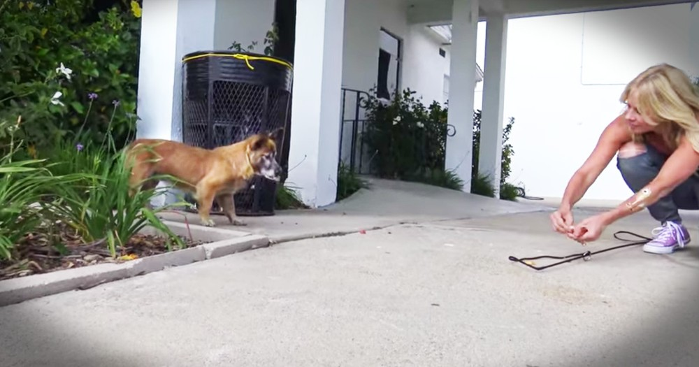 Scared Dog Left In A Cemetery Gets A Touching Rescue